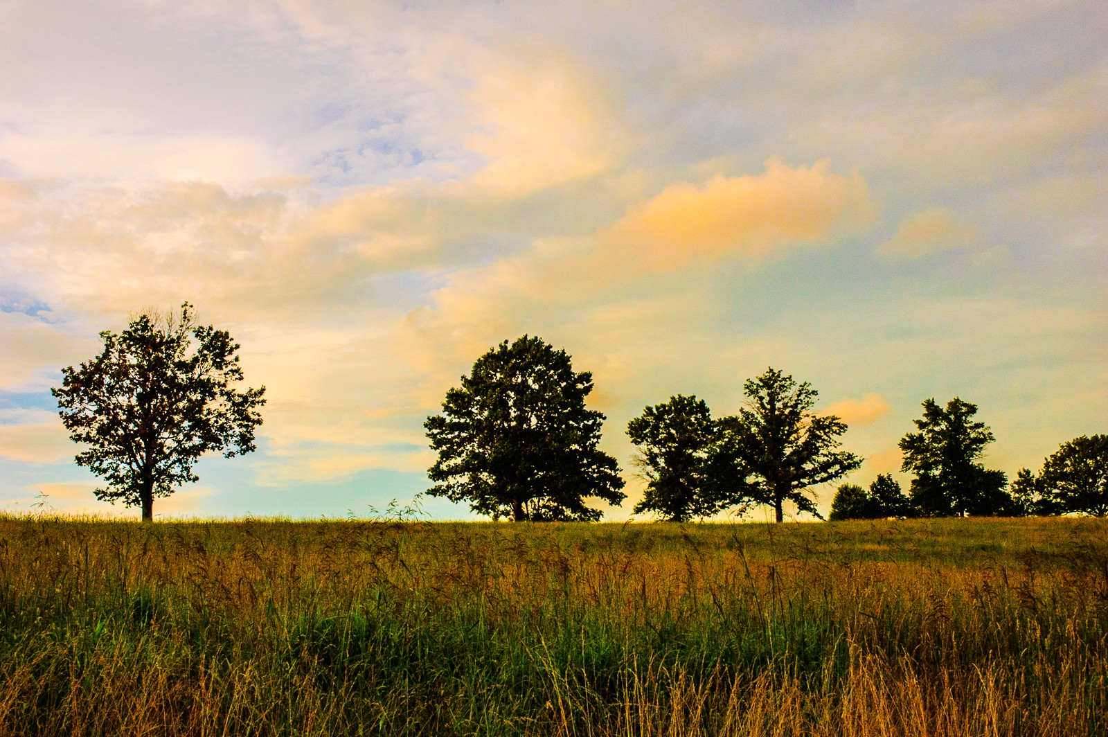 tree line valley-forge-park-0639