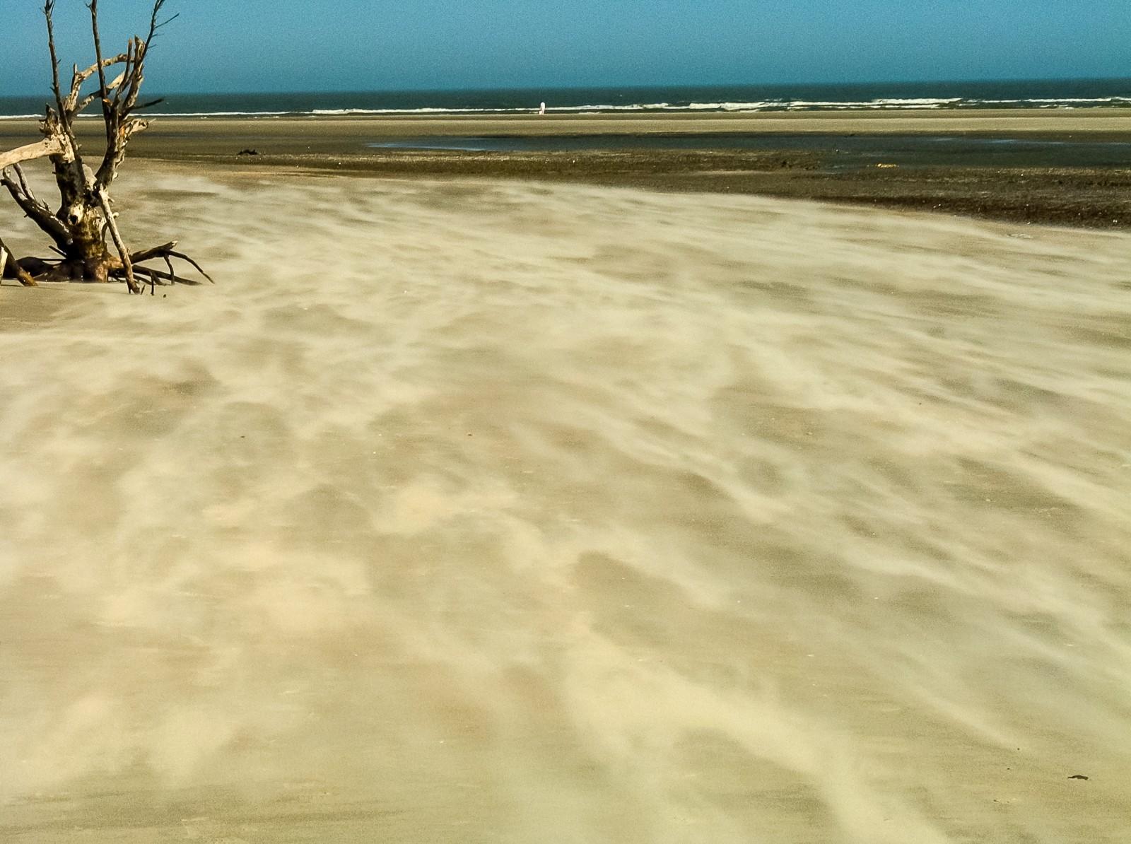 sand-trees-2213587