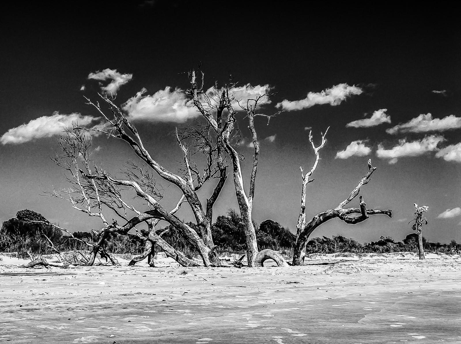 sand-trees-3564