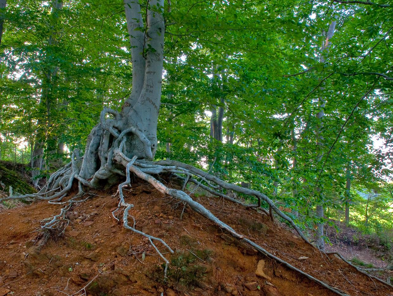 tree-root-_ltd9163_4_5_6_7