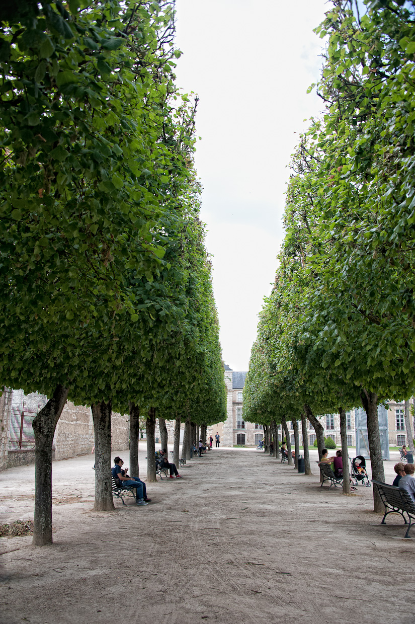 Paris Trees