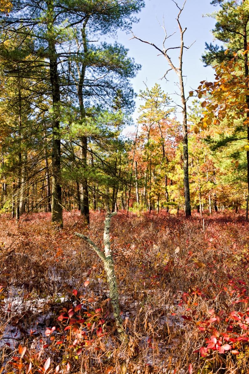 pine-lands-