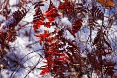 pine-lands--3