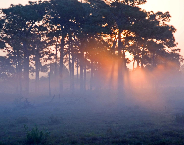fog-l-dallara-photos-1