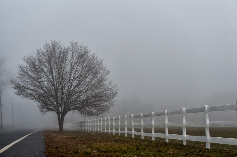 foggy-tree-2701