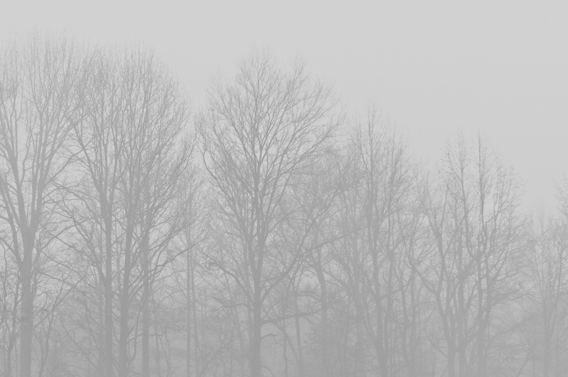 foggy-trees-3895
