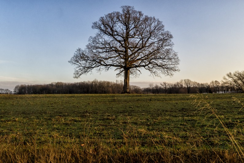 lone-tree-20365