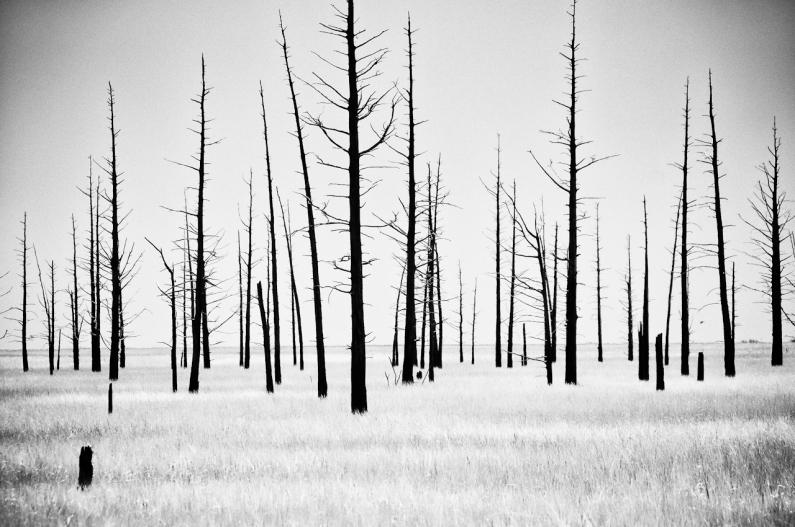 dead-cedars-1985