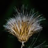 seeds-5247