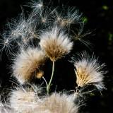 seeds-5252