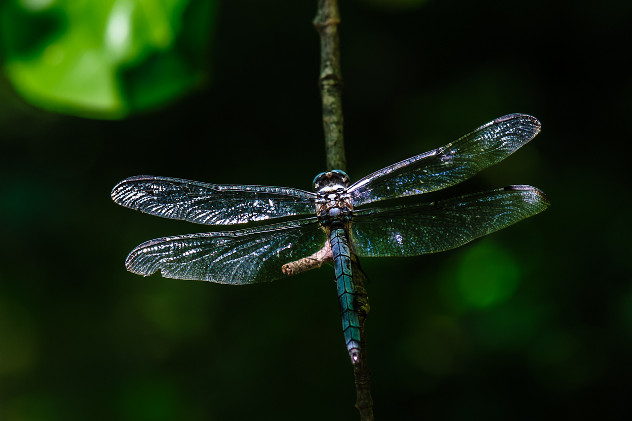 dragon-fly-5343