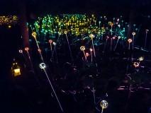 light-installation-1020819