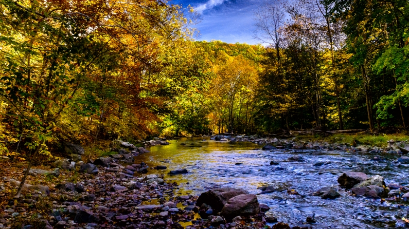 fall-color-