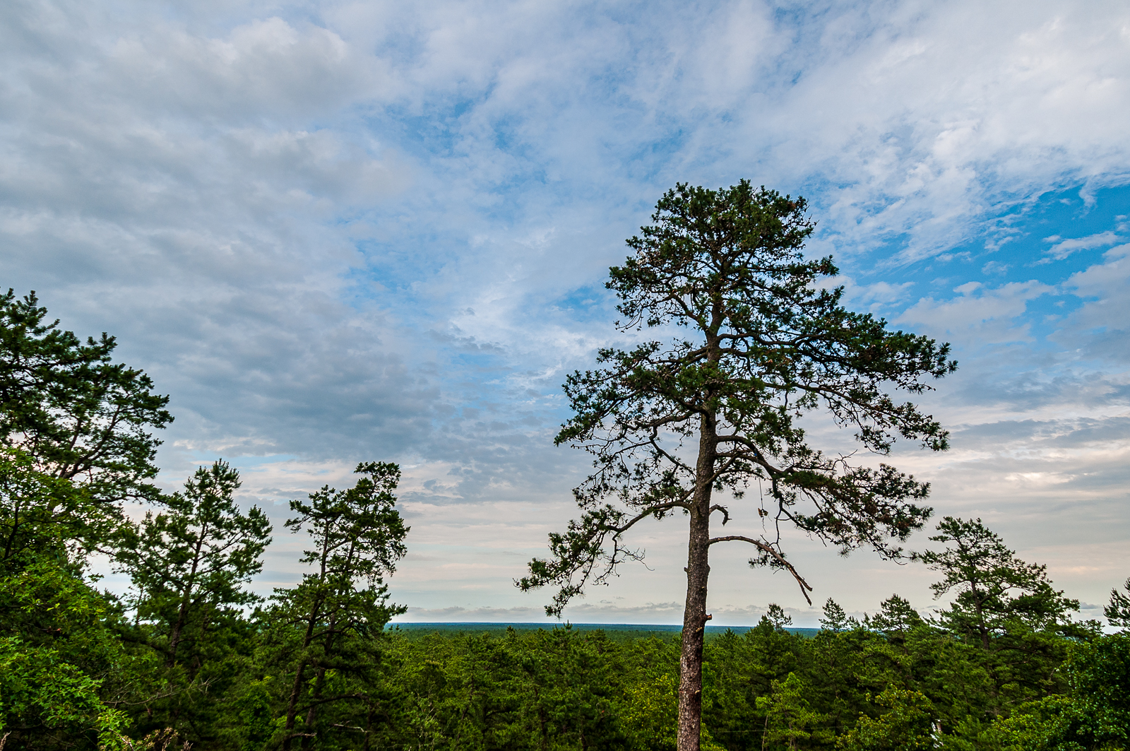 https://www.louisdallaraphotography.com/2012/12/28/view-of-the-pinelands-from-apple-pie-hill-tower