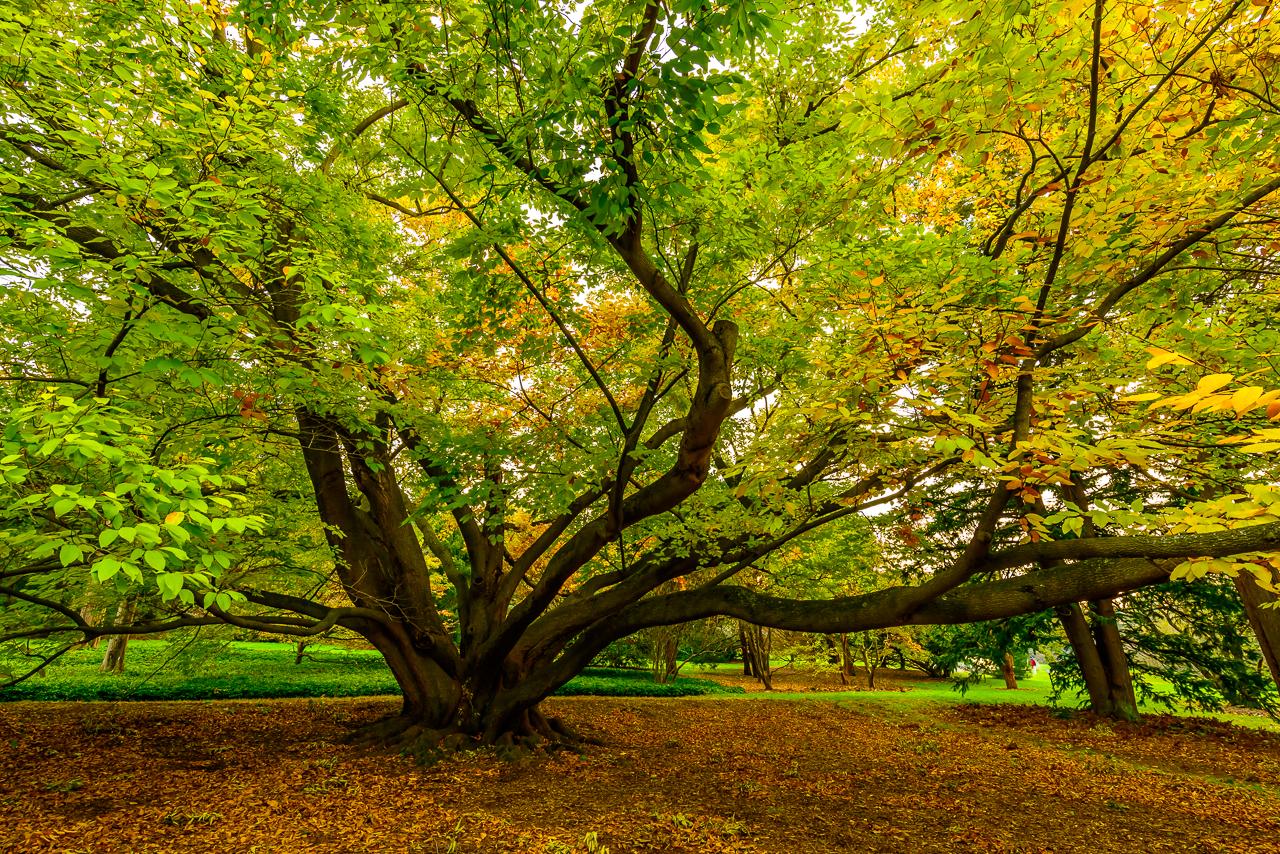 morris-arboretum-1803