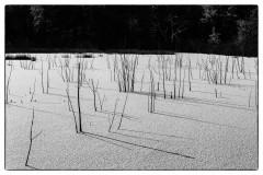 sticks-snow-ltd6203