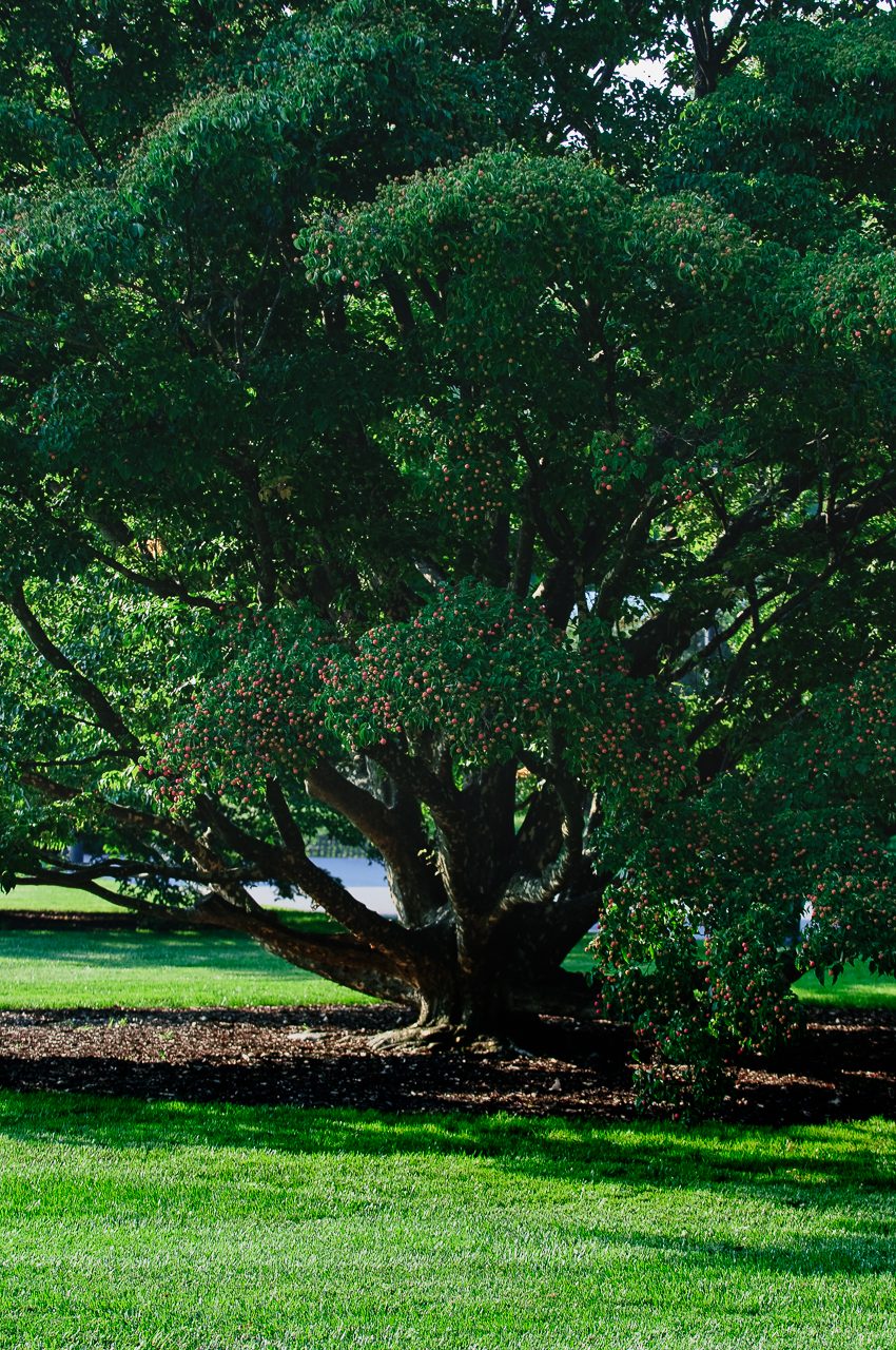 longwood-gardens-tree-501