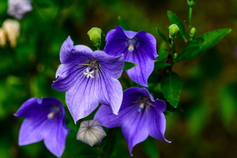 purple-flower-3184