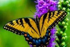 butterfly-3174