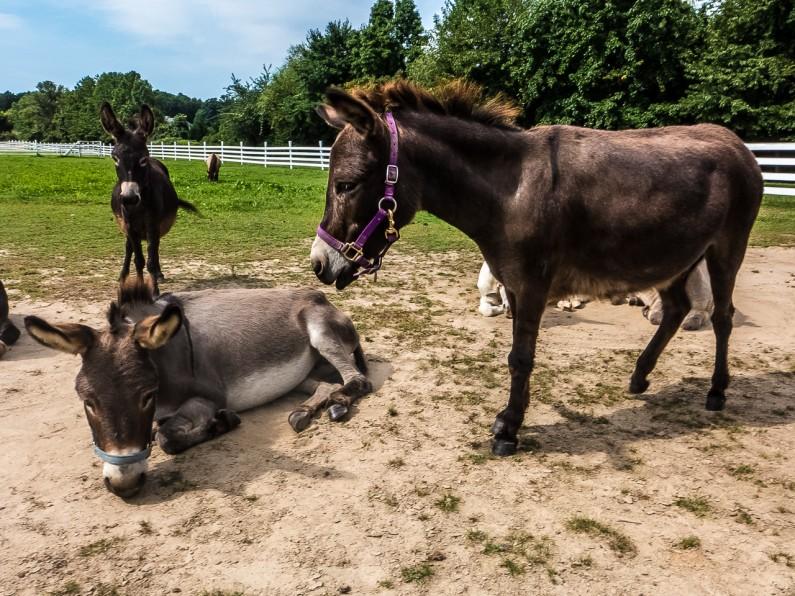 donkey-1020447