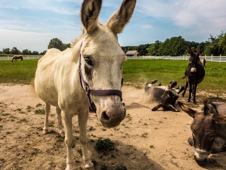 donkey-1020448