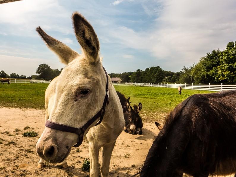 donkey-1020451