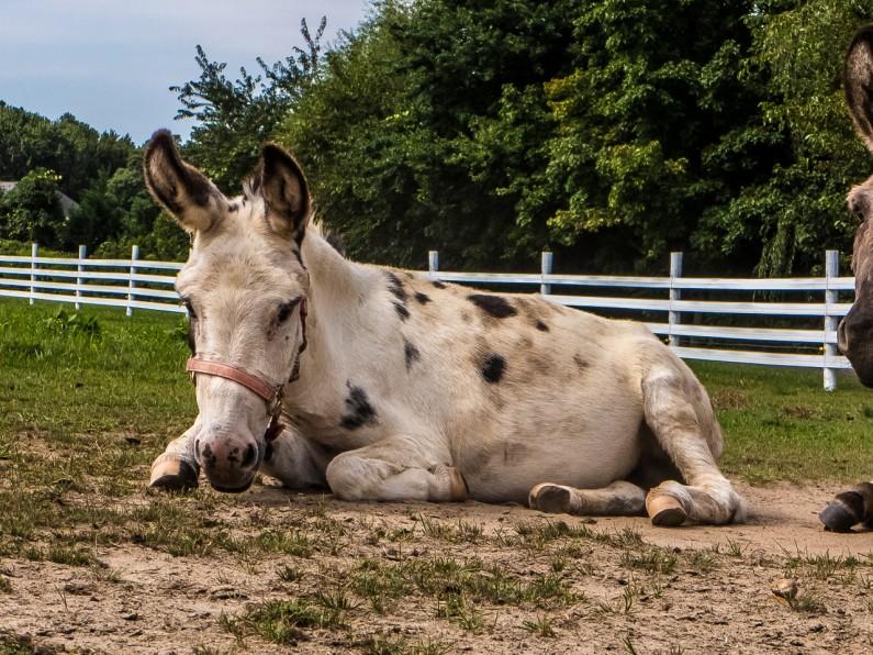 donkey-1020456
