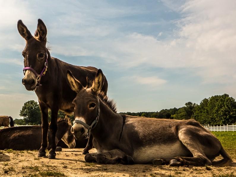donkey-1020457