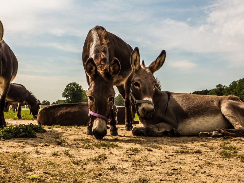 donkey-kong-1020459
