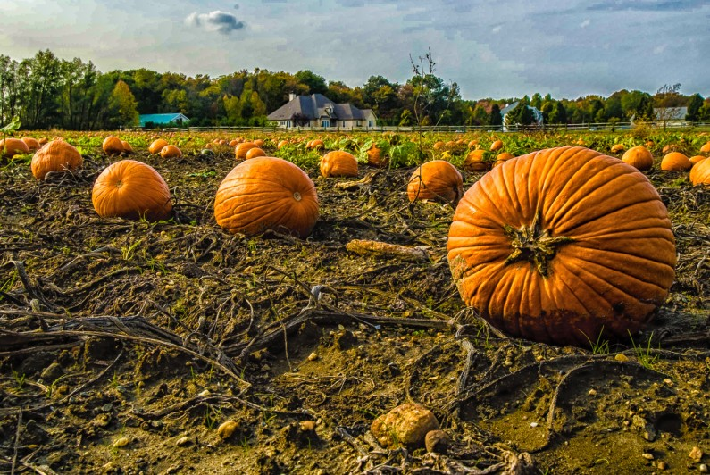 pumpkins-louis-dallara-