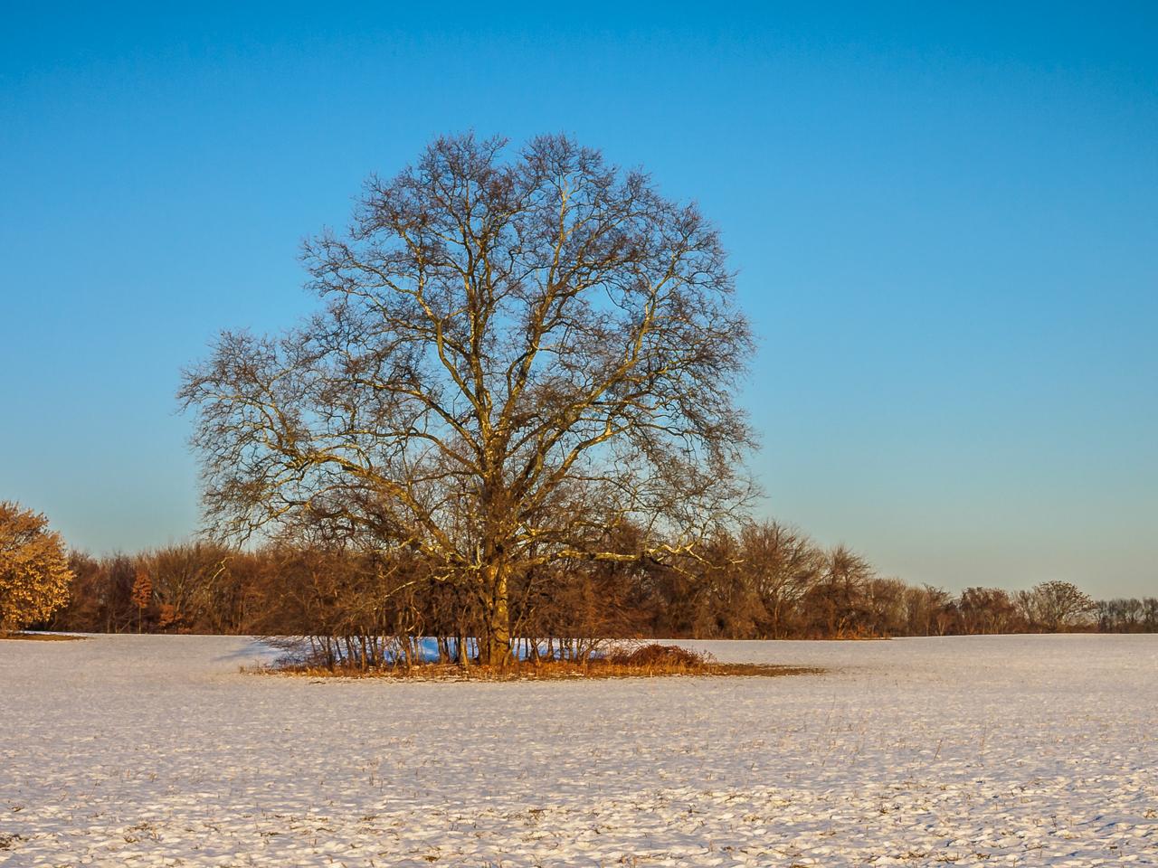 tree-spirit-120166