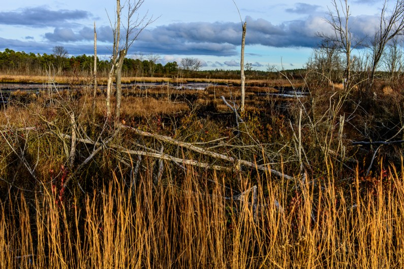 whitesbog-landscape (1 of 1)-2