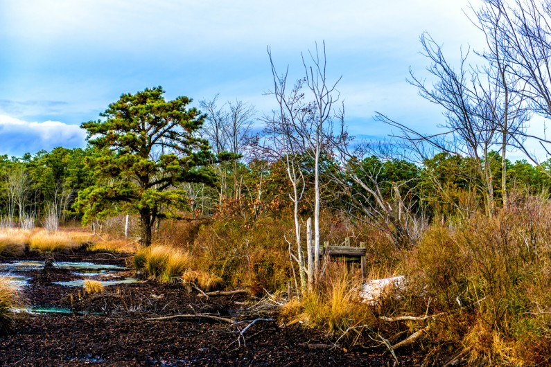 whitesbog-landscape (1 of 1)-3