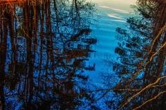 buke-birch-trees-