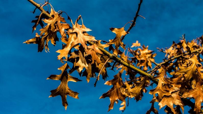 last-leaves-1170312-2