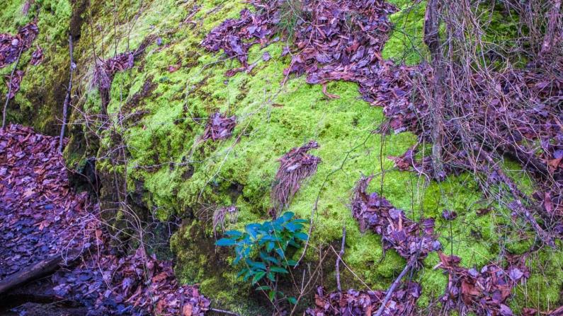 moss-leaves-