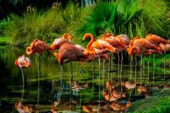 pink-flamingos-ldallara