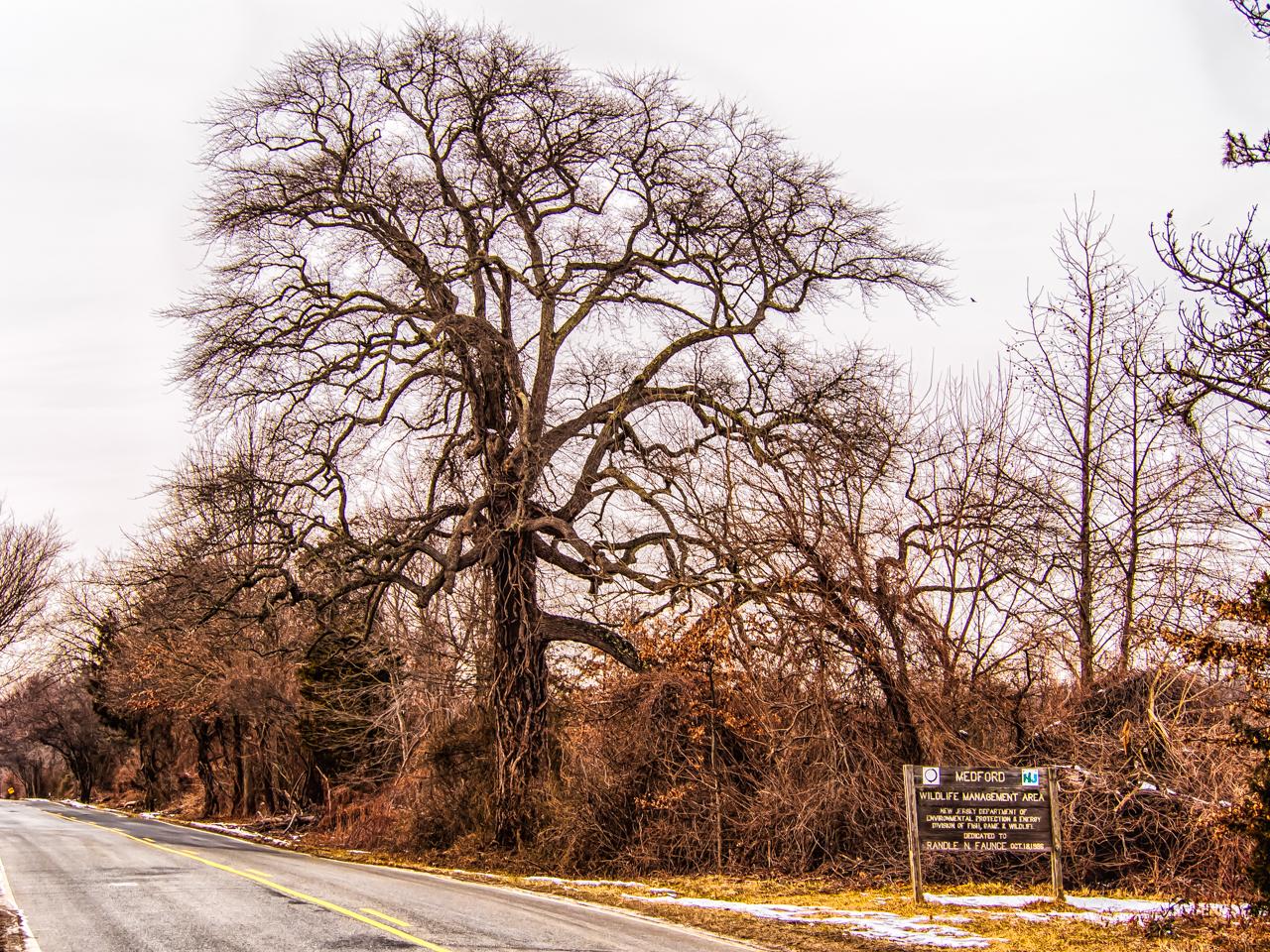 big-tree-