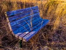 pinelands-bench-1000111