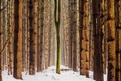 woods-snow-dead-center