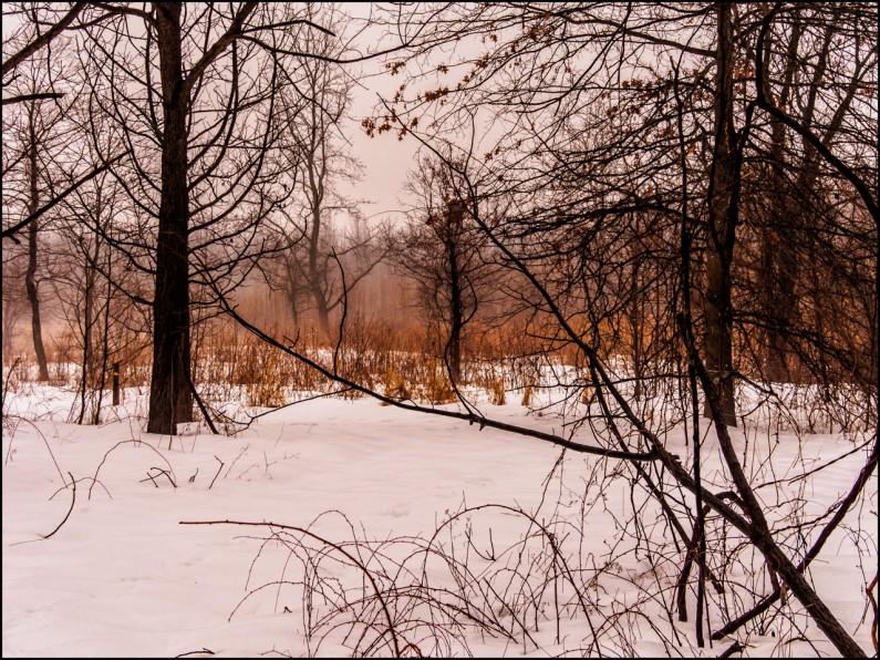 woods-snow--3