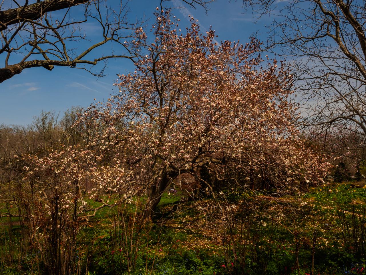Photograph of a Beautiful tree at Chanticleer-4250022