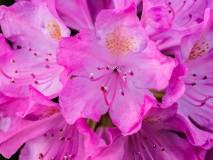 flowers-5230644