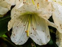 flowers-5230649