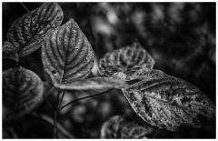 leaf--2