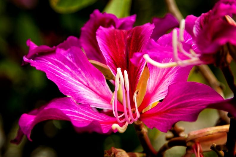 simple-flower-