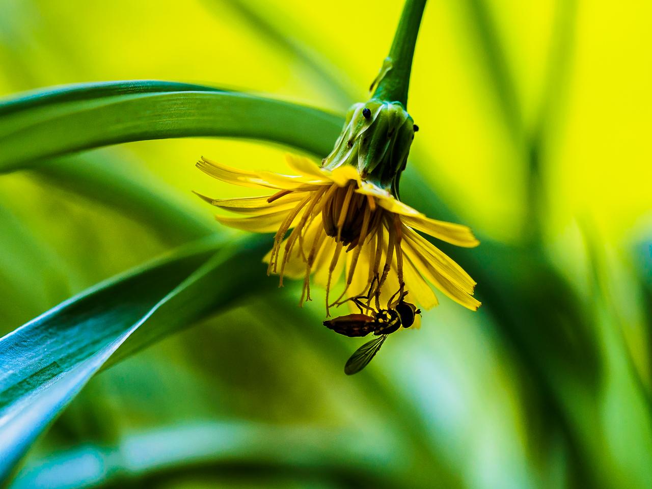 bug-flower-2247