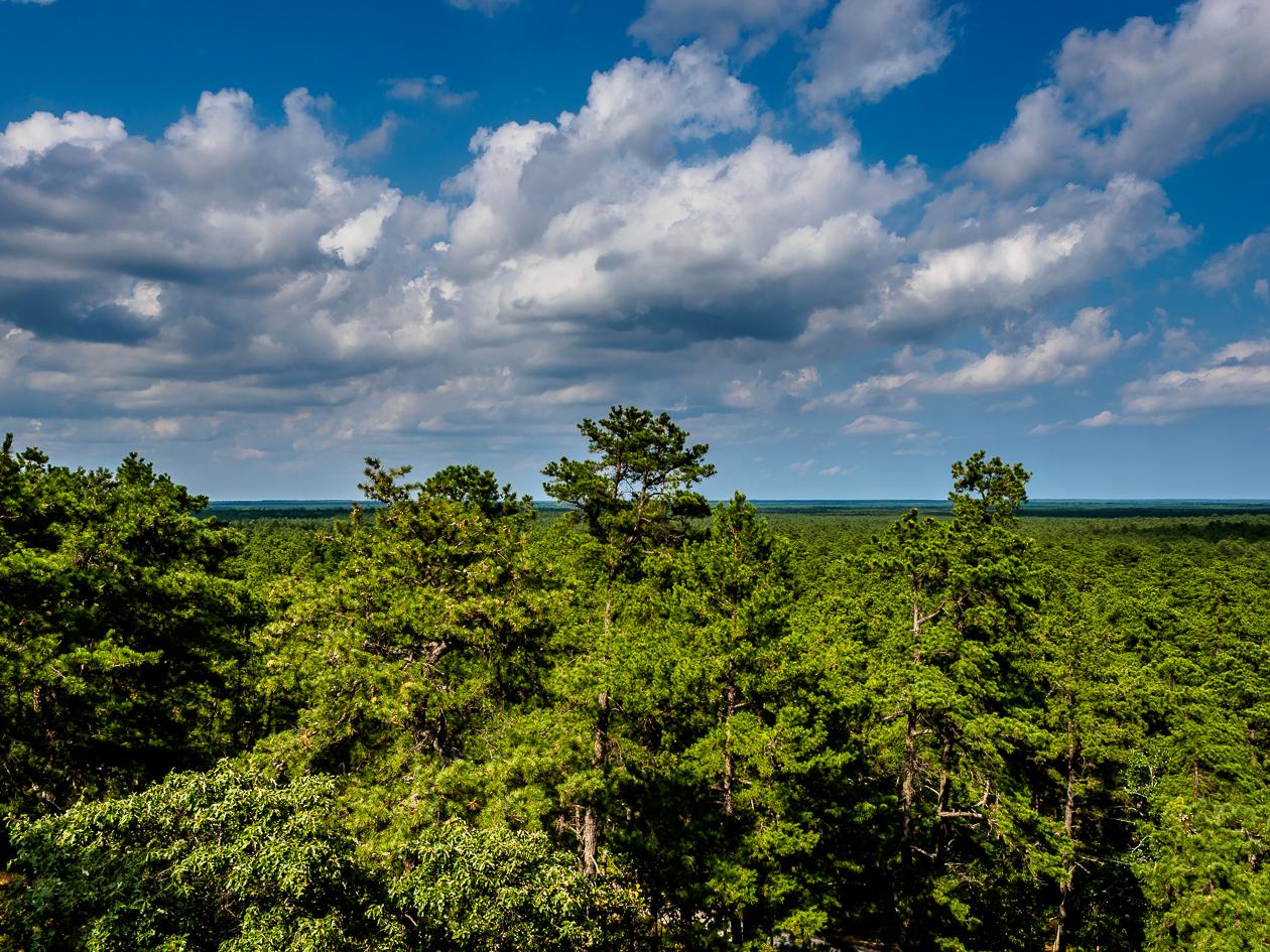 Cloud Play Pine Barrens NJ Photo