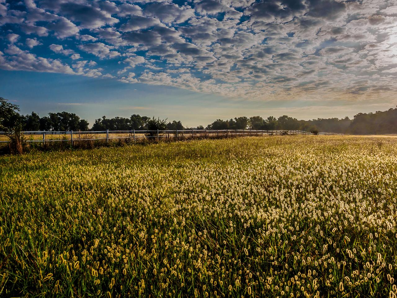 goldern-field-