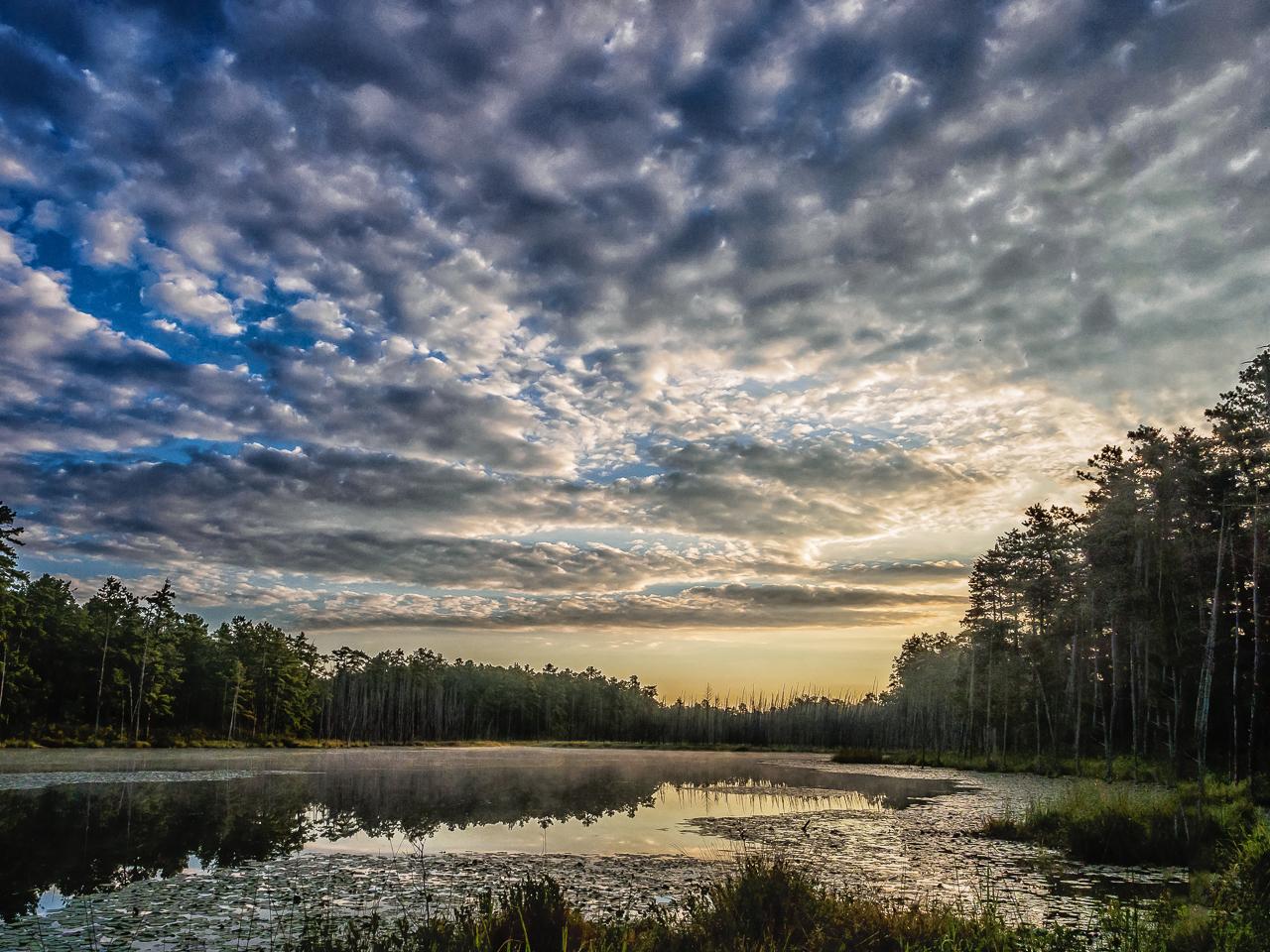 roberts-branch-pine-lands-